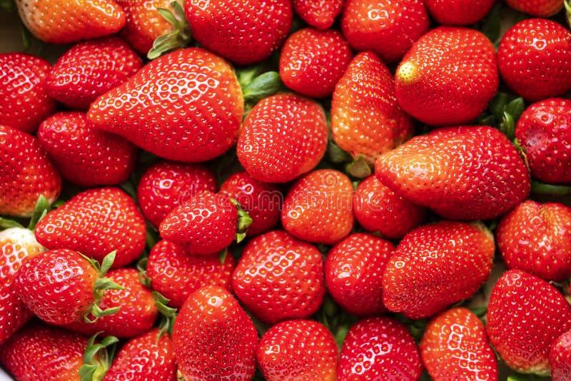 手工采摘的有机草莓 免版税图库摄影