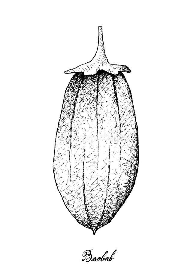 手拉在白色背景的猴面包树或猴面包树果子 库存例证