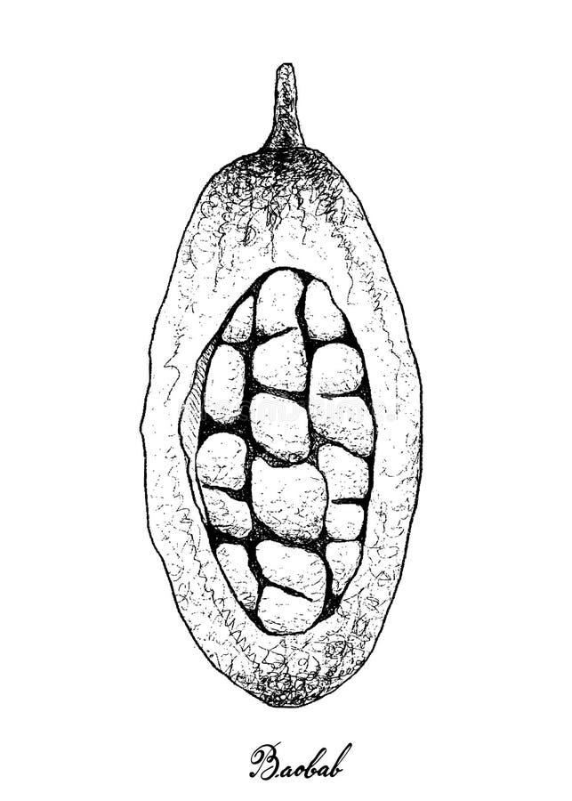 手拉在白色背景的猴面包树或猴面包树果子 皇族释放例证