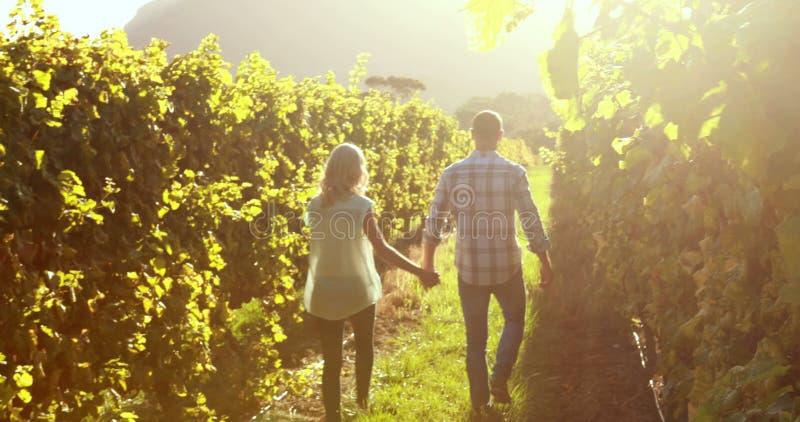手拉手走在葡萄树之间的夫妇