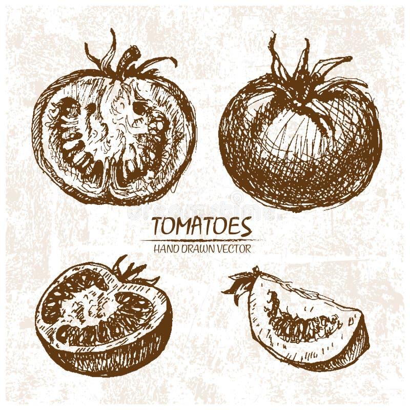 手拉数字式传染媒介详细的蕃茄 皇族释放例证