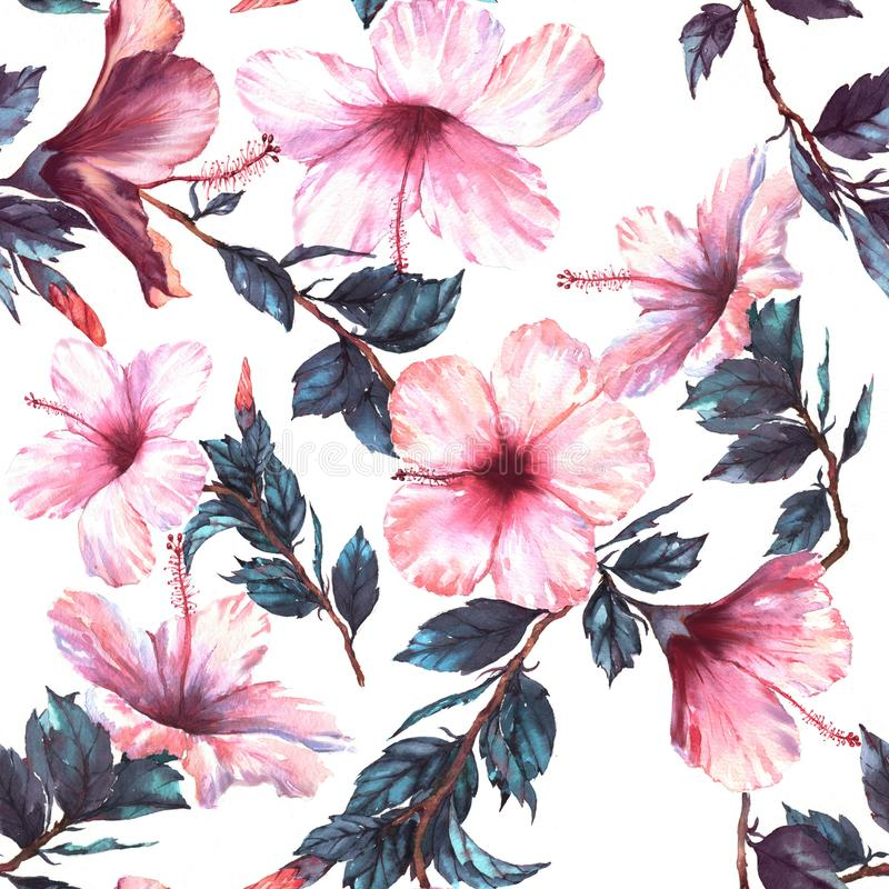 手拉的与嫩白色和桃红色木槿的水彩花卉无缝的样式开花 向量例证
