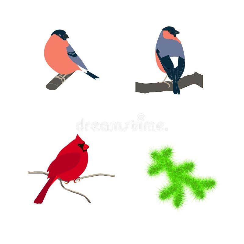 手拉的五颜六色的红色主要鸟、红腹灰雀、冷杉早午餐分支的上色页的和印刷品 向量例证