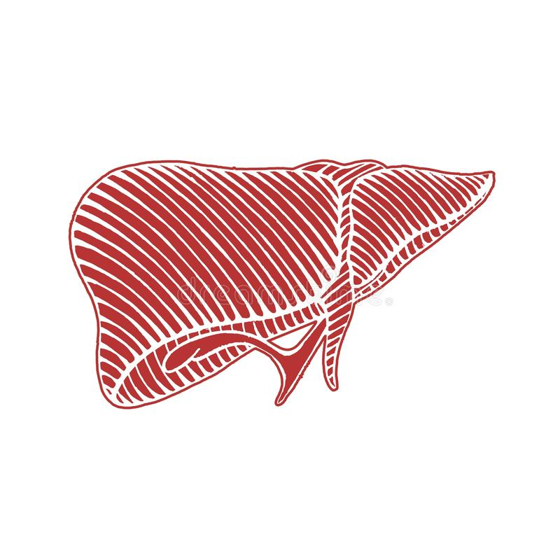 手拉的人的肝脏图画-与线的例证相反 向量例证