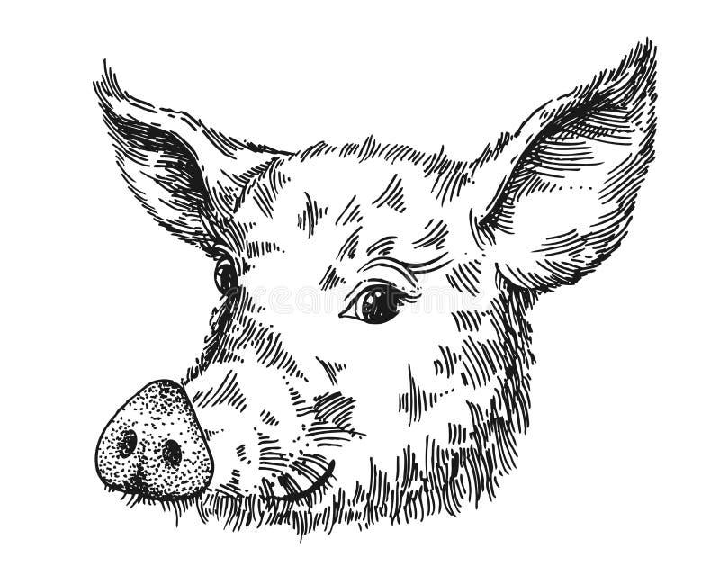 手拉的传染媒介例证猪剪影 新年的标志2019年 向量例证