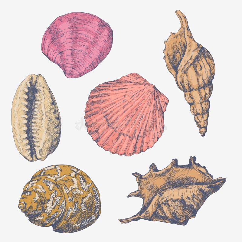 手拉的传染媒介例证-贝壳的汇集 海军陆战队员集合 向量例证