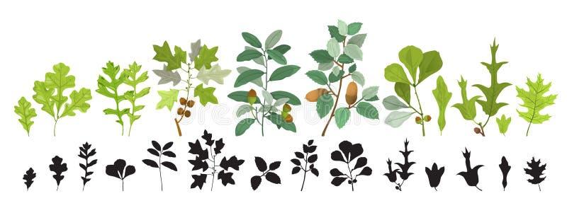 手拉的传染媒介套橡木叶子和分支 皇族释放例证