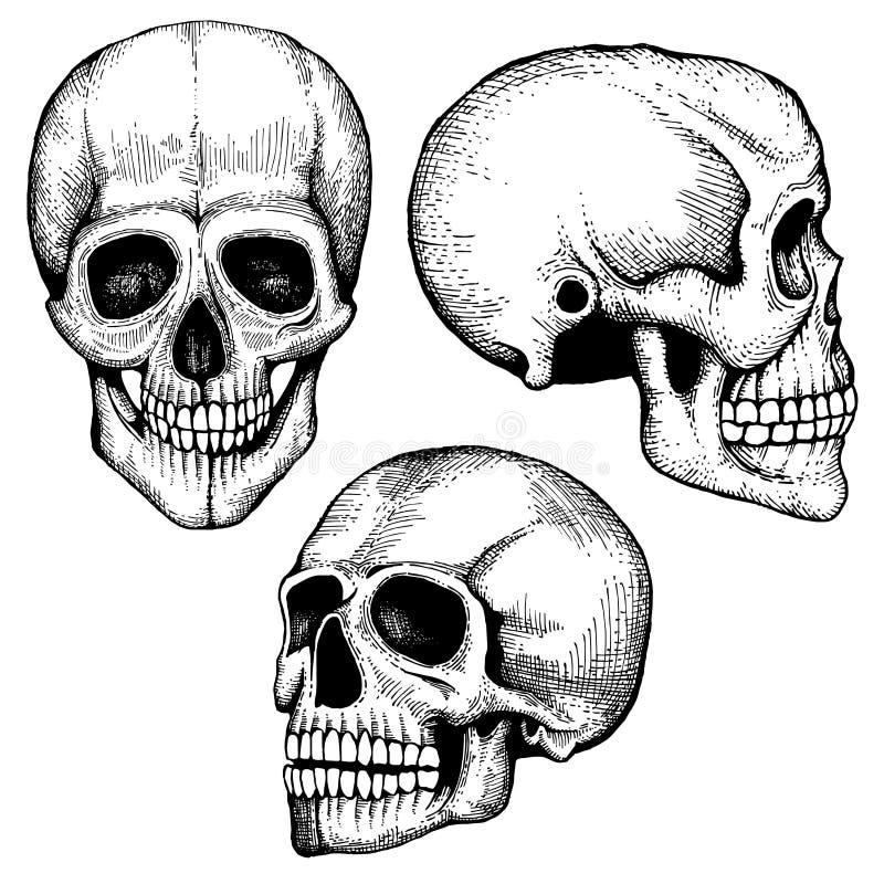 手拉的传染媒介死亡可怕人的头骨收藏 向量例证
