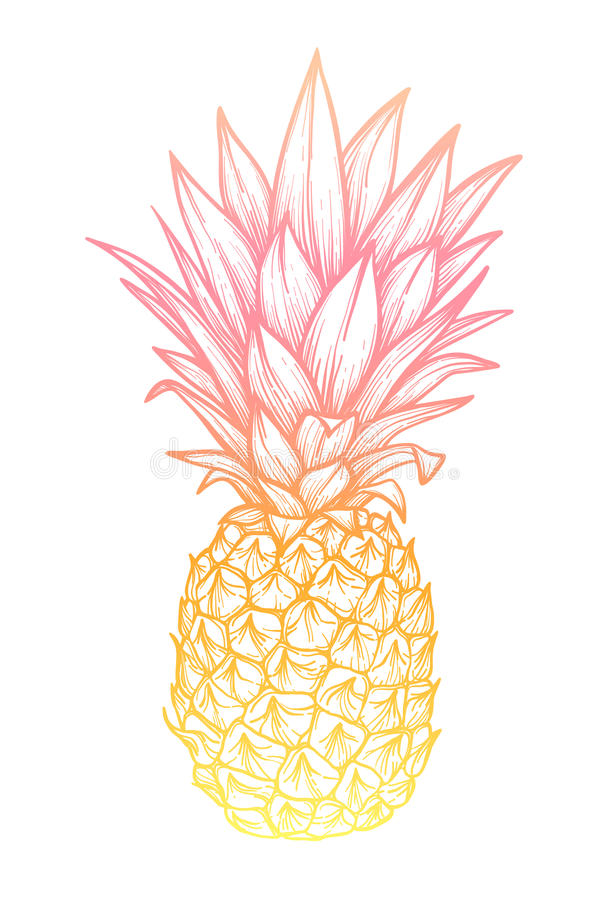 手拉的传染媒介例证-菠萝 异乎寻常的热带frui 库存例证