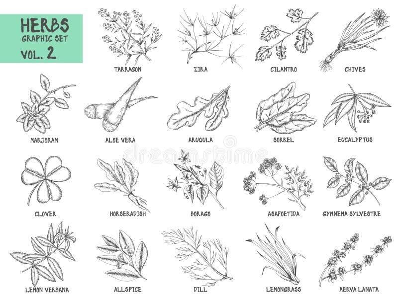 手拉的传染媒介套草本和香料葡萄酒 库存例证