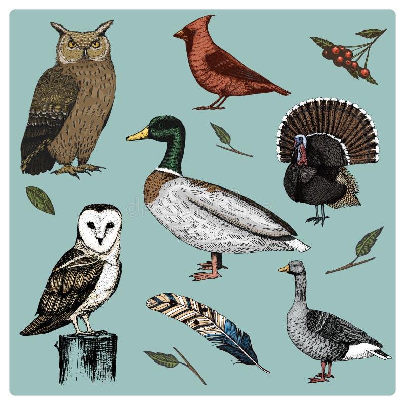 手拉的传染媒介现实鸟,剪影图表样式,套国内 土耳其和鸭子 鹅和红色主教 鸠 皇族释放例证
