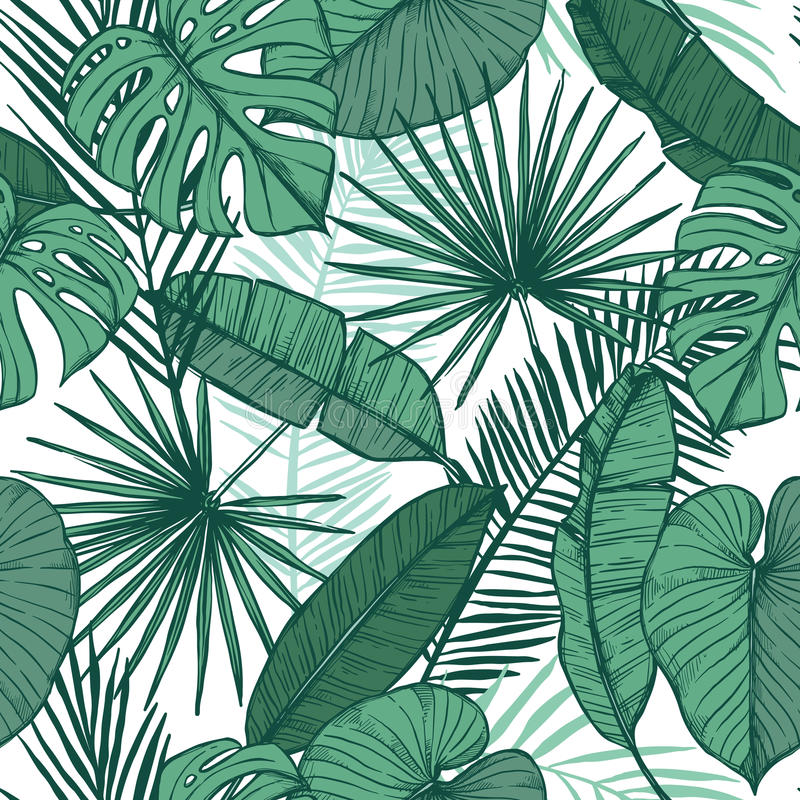 手拉的传染媒介背景-棕榈叶monstera,槟榔树棕榈 皇族释放例证