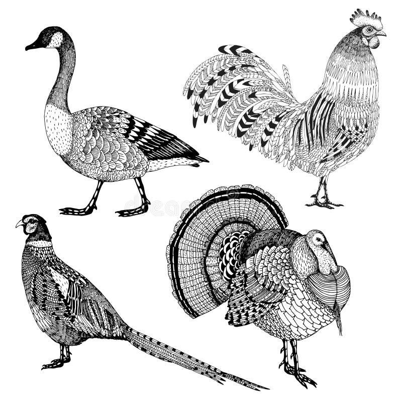 手拉的传染媒介设置了与四只抽象农厂鸟 免版税库存照片