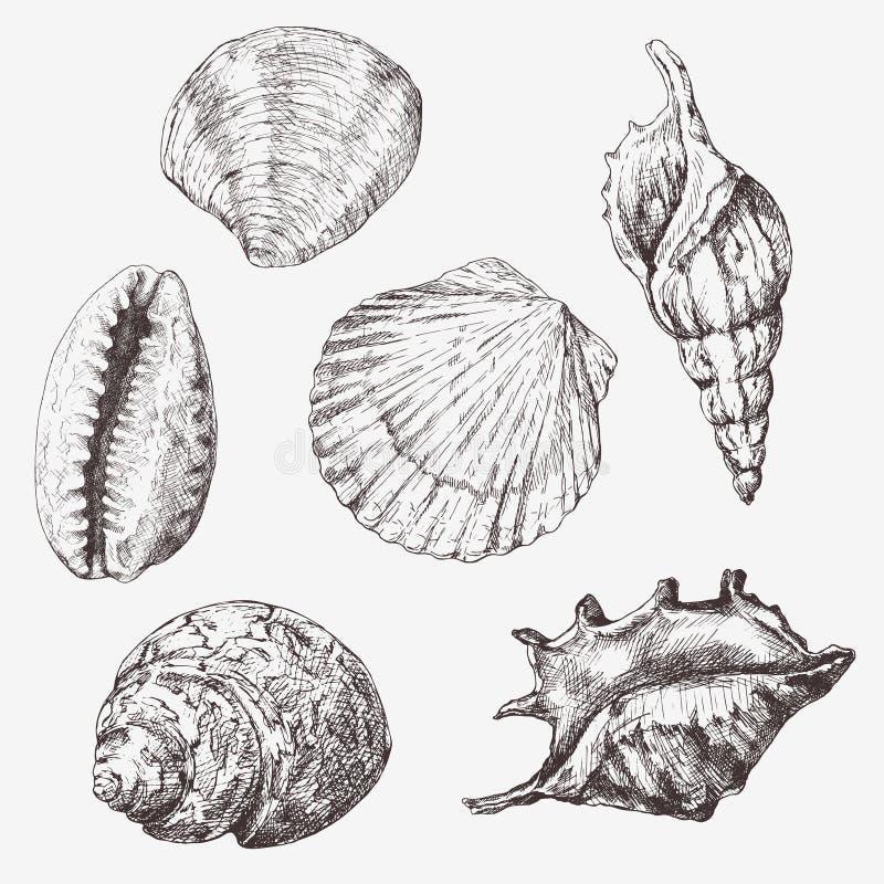 手拉的例证-贝壳的汇集 海军陆战队员集合 库存例证