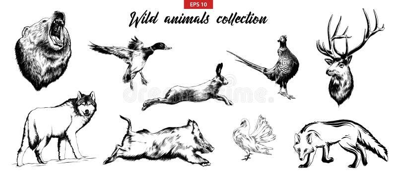 手拉的剪影套野生森林动物 库存例证