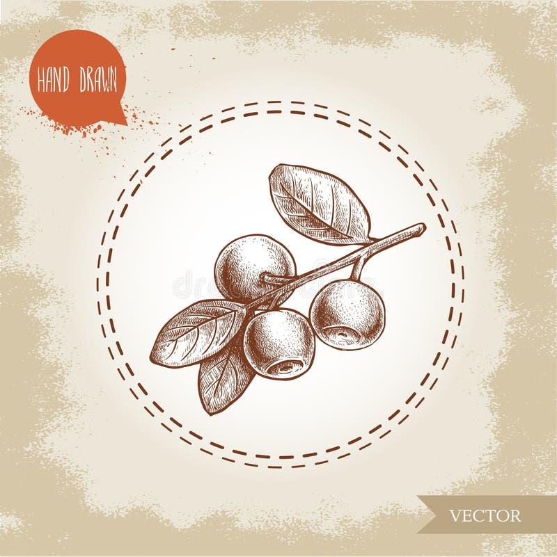 手拉的剪影样式分支用蓝莓 背景几何老装饰品纸张葡萄酒 浆果森林可实现例证的照片 向量例证