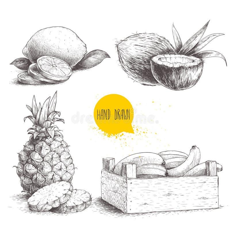 手拉的剪影样式热带水果在白色背景设置了被隔绝 在木箱的香蕉,椰子,与切片a的菠萝 向量例证