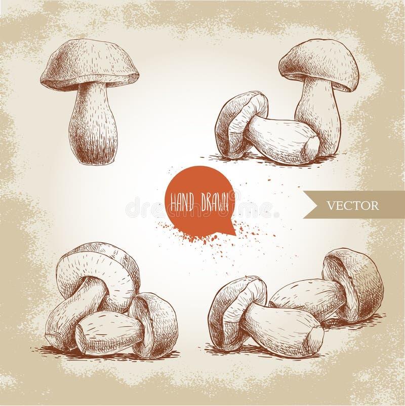 手拉的剪影样式porcini蘑菇集合 可食新鲜的森林的牛肝菌蕈类 意大利食品成分 库存例证