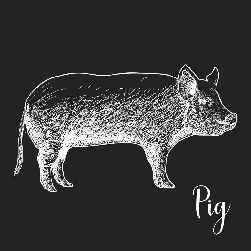 手拉的剪影猪传染媒介例证 向量例证