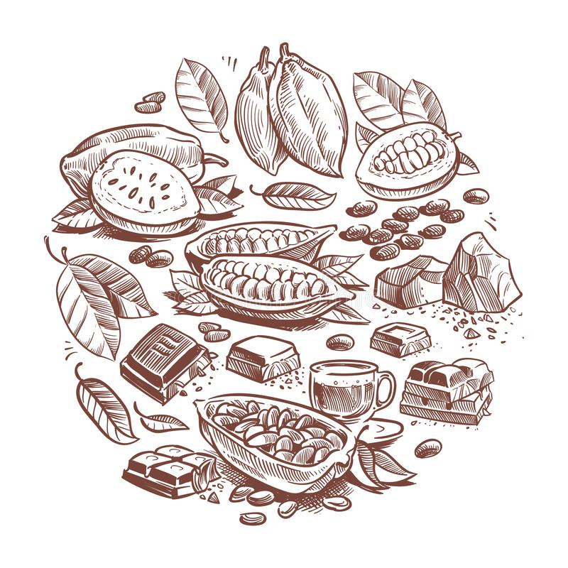 手拉的可可子,巧克力设计 乱画可可树在白色背景隔绝的向量图形 库存例证