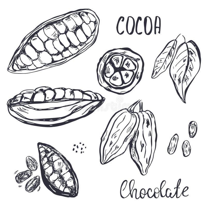 手拉的可可粉荚、豆和叶子 库存例证