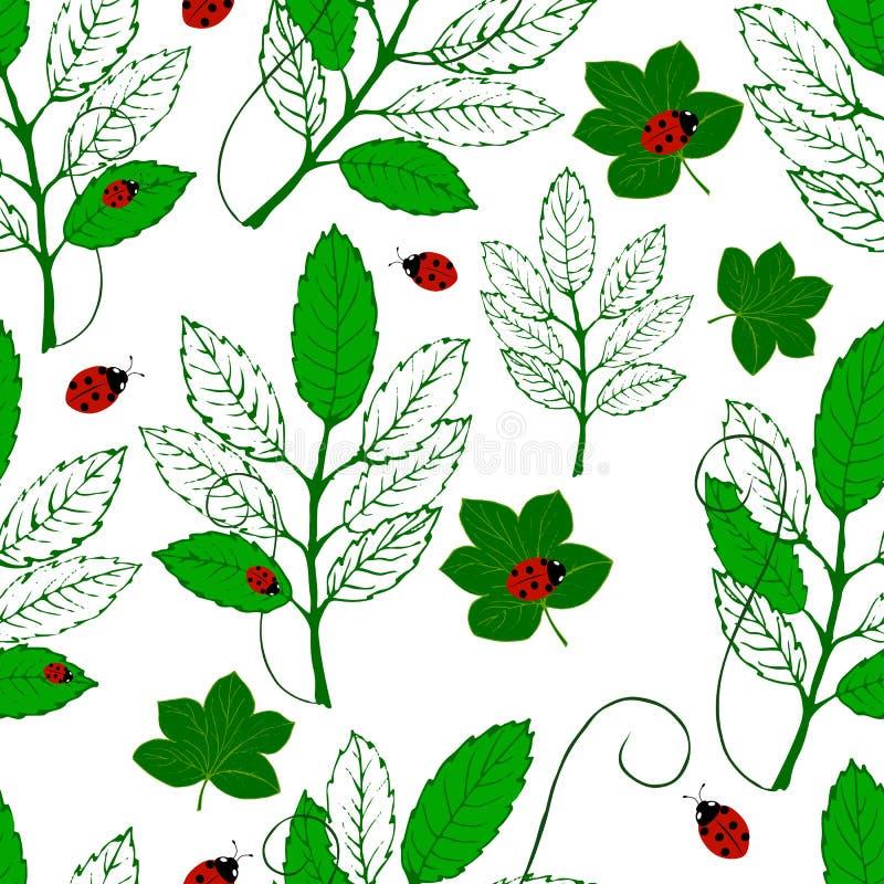 手拉的叶子和瓢虫的无缝的样式在白色背景 库存照片