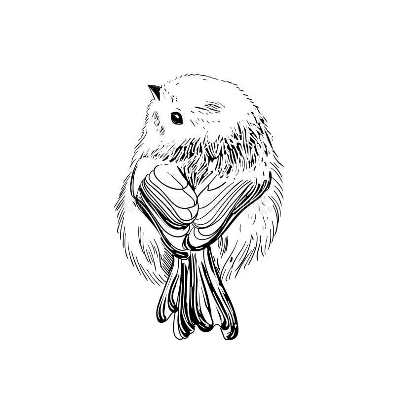 手拉的向量例证 剪影鸟 墨水起草鸟 板刻birs 黑色白色 背景查出的白色 Smal 向量例证
