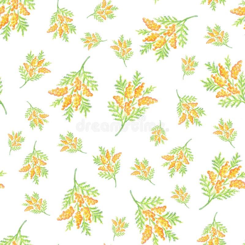 手拉的含羞草开花无缝的样式背景 向量例证