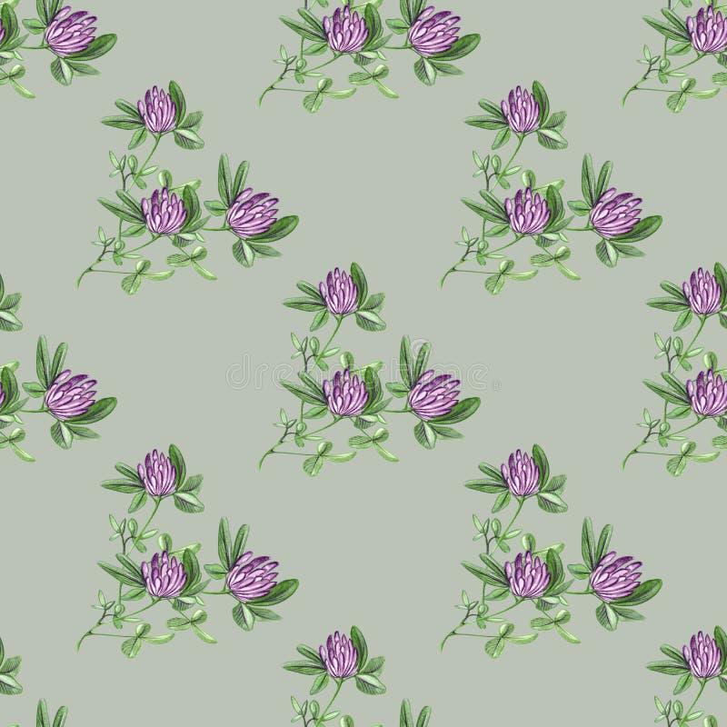 手拉的在浅绿色的背景的样式无缝的水彩红三叶草花分支例证 库存照片
