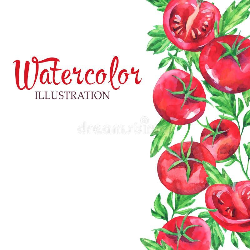 手拉的垂直的横幅用水彩红色蕃茄和叶子在白色背景 库存例证