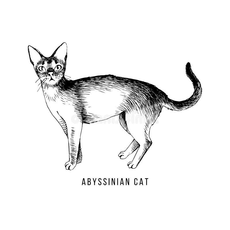 手拉的埃塞俄比亚猫 向量例证