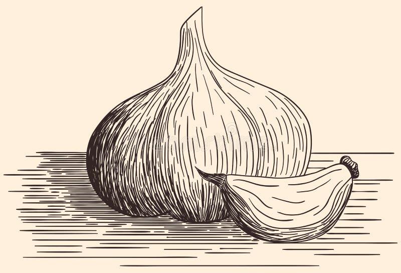 download 手拉的大蒜 向量例证.图片