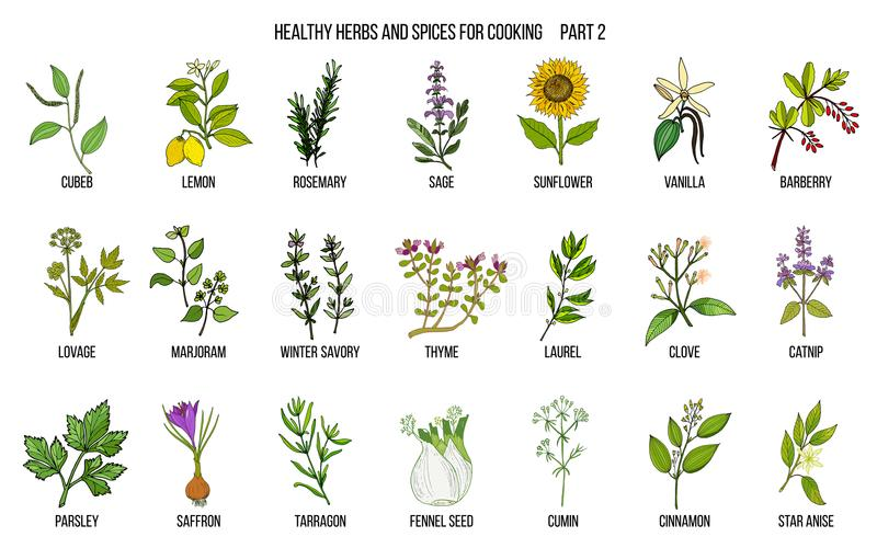 手拉的套烹饪草本和香料 向量例证