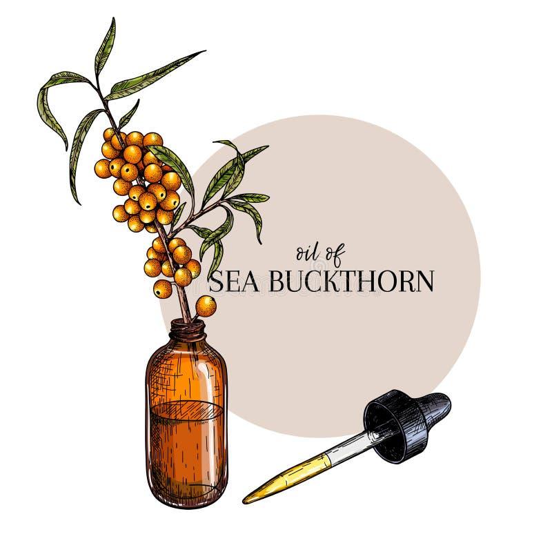 手拉的套精油 传染媒介海鼠李莓果 与玻璃吸管瓶的医药草本 刻记上色 皇族释放例证