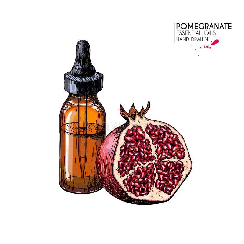 手拉的套精油 传染媒介石榴和花 与玻璃吸管瓶的医药草本 刻记 皇族释放例证