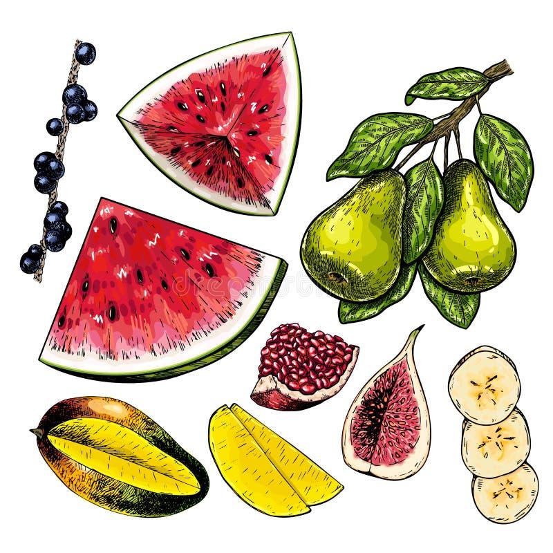 手拉的套fuits 导航色的被隔绝的对象 无花果,芒果,石榴,梨分支,acai,香蕉切片 向量例证