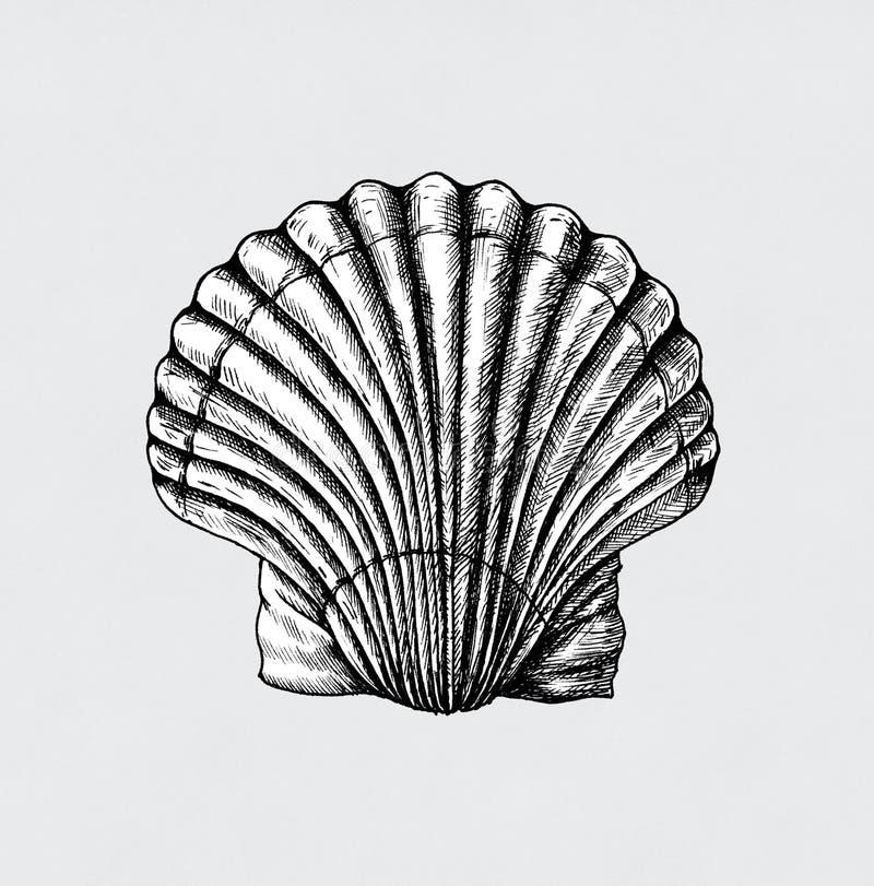 手拉的扇贝盐水蛤蜊 皇族释放例证