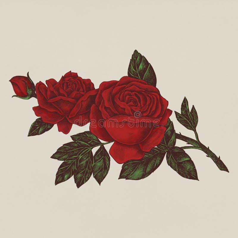 手拉的新鲜的红色玫瑰 库存例证