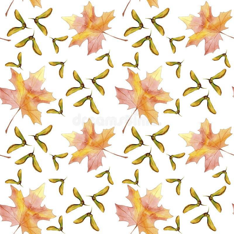 手拉的无缝的样式水彩五颜六色的槭树秋天叶子和飞过的种子在白色背景隔绝的槭树 库存例证