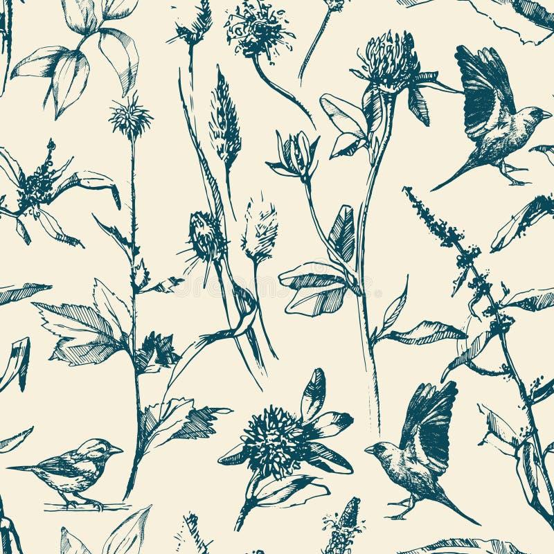 手拉的无缝的样式用草本和鸟 库存例证