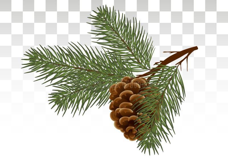 手拉的杉木锥体和杉树 植物的被画的传染媒介illust 皇族释放例证