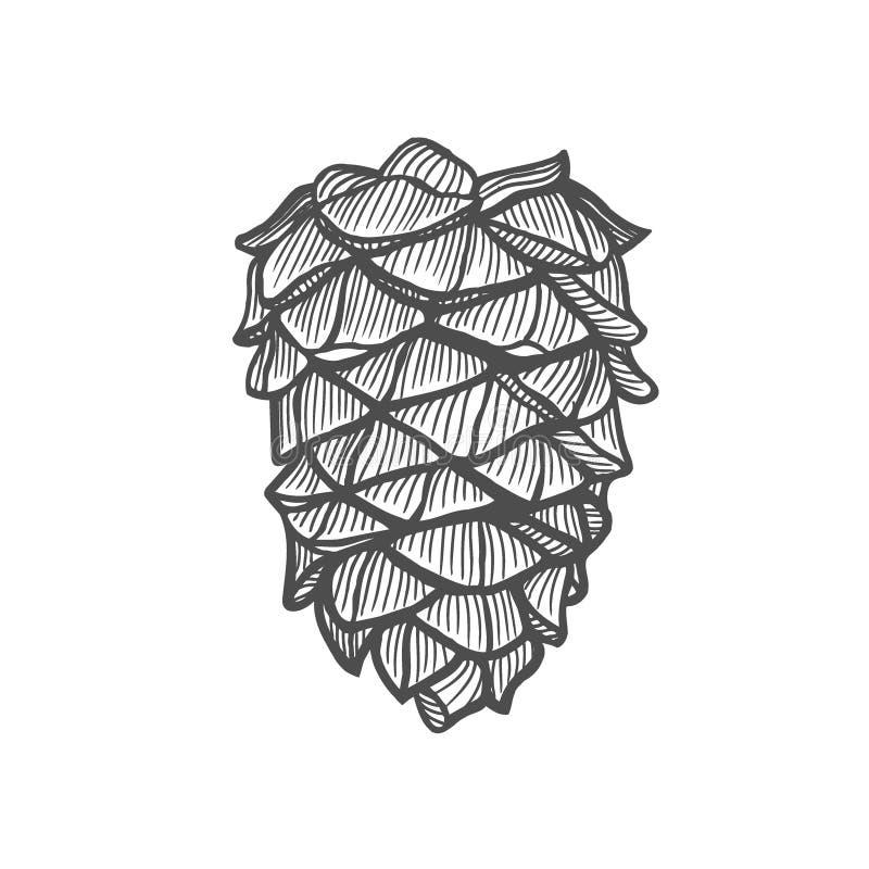 手拉的杉木锥体 库存例证