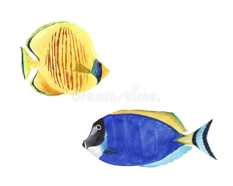 手拉的水彩例证套五颜六色的明亮的热带鱼隔绝了 库存例证