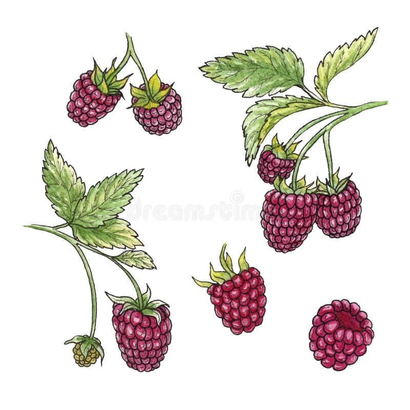 手拉的水彩例证套在白色背景的莓元素 皇族释放例证