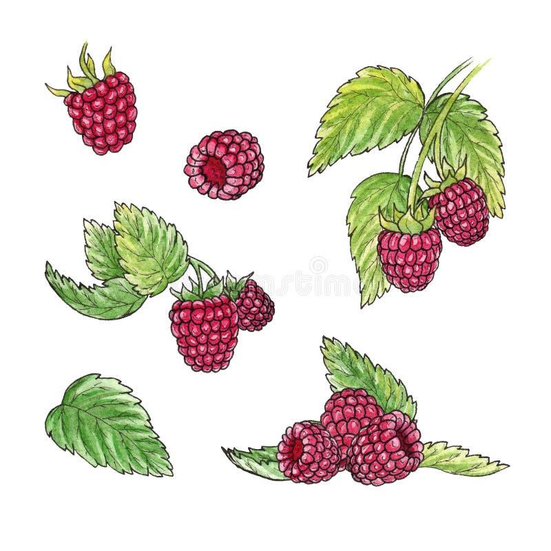 手拉的水彩例证套在白色背景的莓元素 向量例证