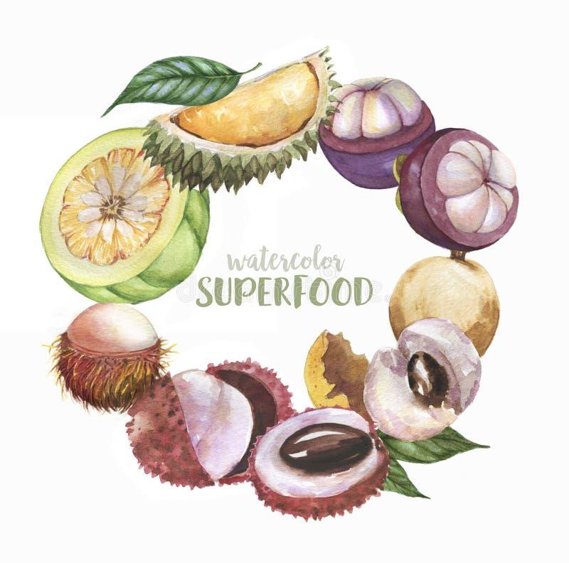 手拉的水彩例证套超级食物异乎寻常的果子:荔枝,龙眼,红毛丹,在白色背景隔绝的留连果 库存例证