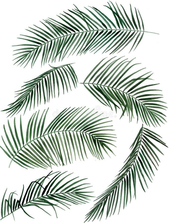 手拉的水彩棕榈叶例证 皇族释放例证