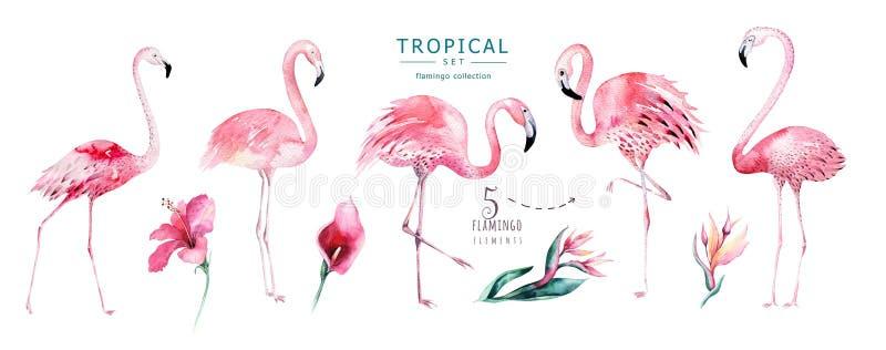 手拉的水彩热带鸟被设置火鸟 异乎寻常的玫瑰色鸟例证,密林树,巴西时髦艺术 皇族释放例证