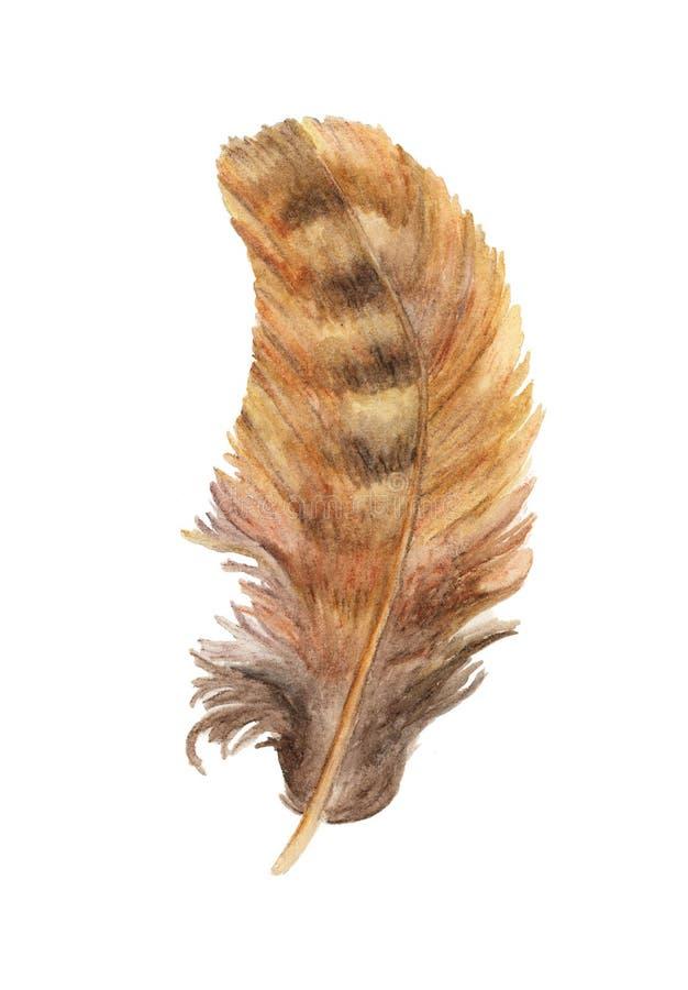 手拉的水彩绘画充满活力的羽毛 Boho样式翼 在白色查出的例证 皇族释放例证