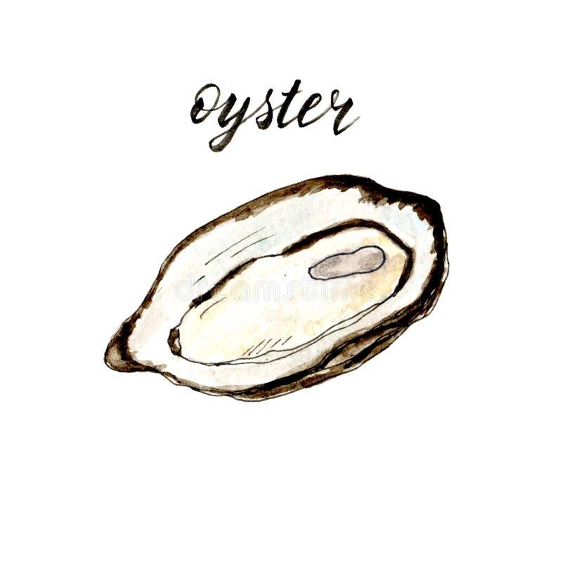 手拉的水彩被隔绝的牡蛎 库存例证